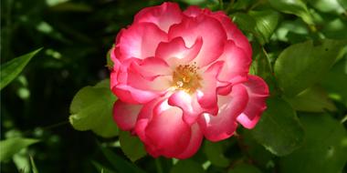 Bloemen soorten